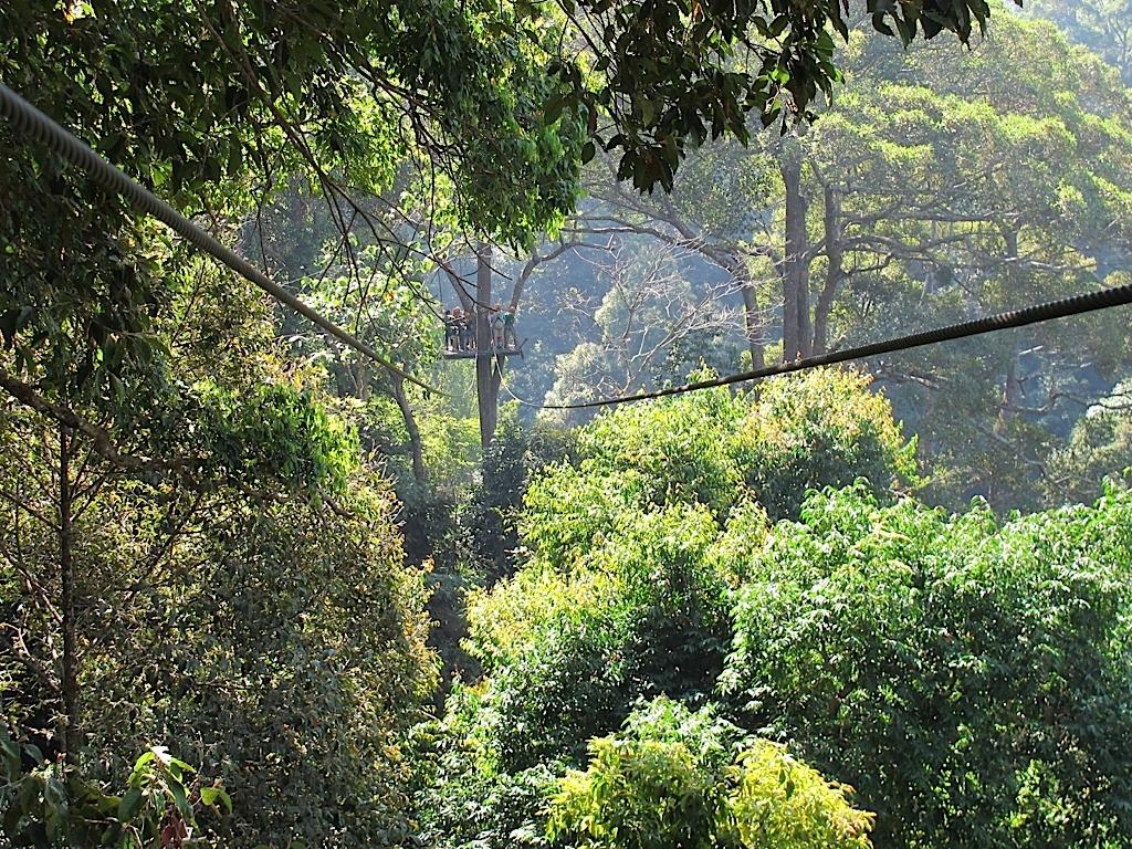 清迈刺激飞越丛林 - jungle flight图片