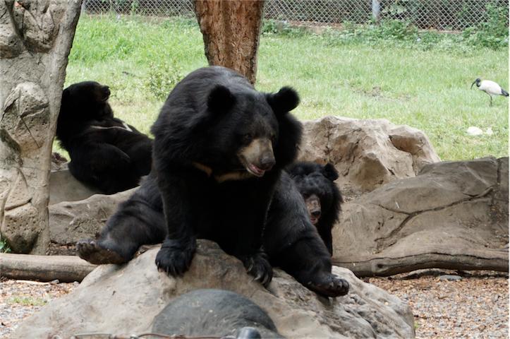 泰国最大兼最多元化的开放式野生动物园